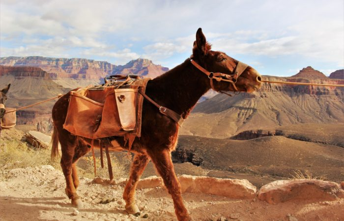 Grand Canyon Winter Hiking