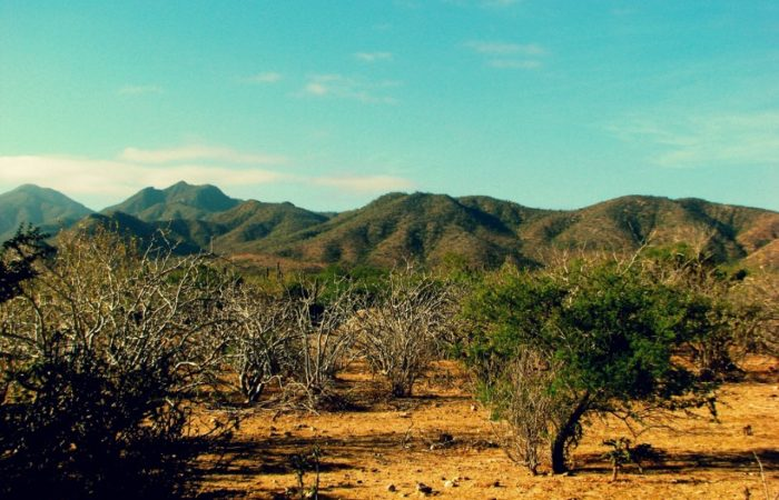 baja mexico desert safari